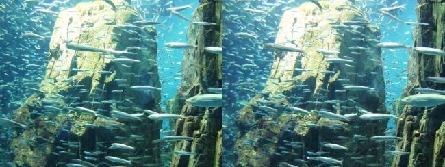 海遊館 展示(平行法)