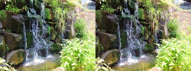 京都水族館 京の里山④(交差法)