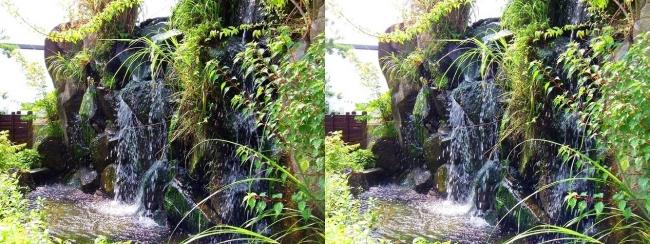 京都水族館 京の里山①(平行法)