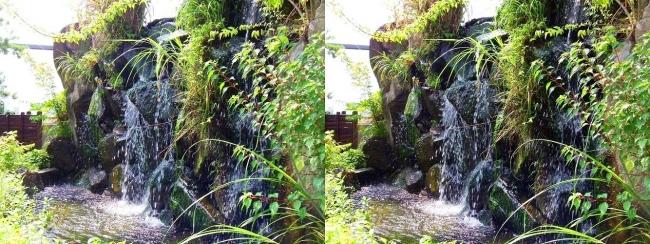 京都水族館 京の里山①(交差法)
