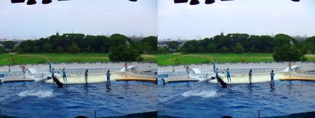 京都水族館 イルカスタジアム⑤(平行法)