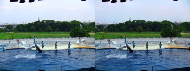 京都水族館 イルカスタジアム⑤(交差法)