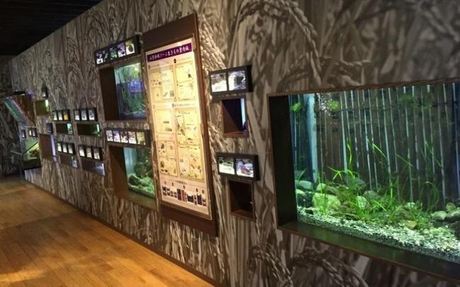 京都水族館 山紫水明ゾーン