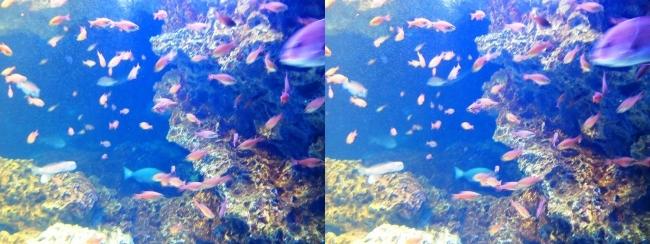 京都水族館 京の海⑨(平行法)