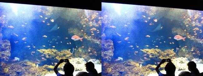 京都水族館 京の海⑧(平行法)