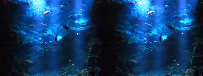 京都水族館 京の海⑥(平行法)