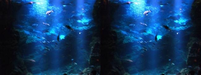 京都水族館 京の海⑥(交差法)