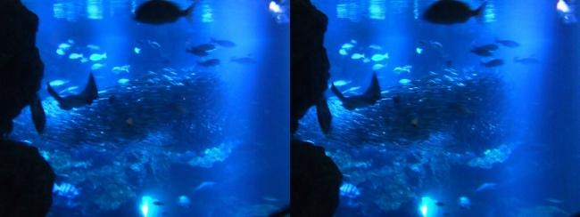 京都水族館 京の海⑤(交差法)