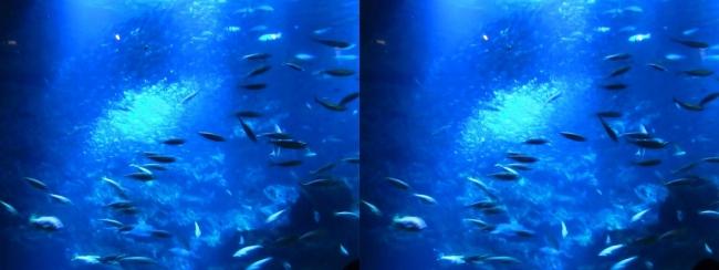 京都水族館 京の海③(平行法)