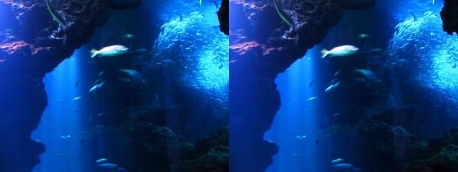京都水族館 京の海②(平行法)