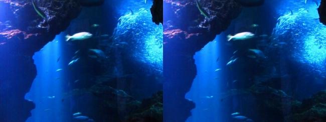 京都水族館 京の海②(交差法)