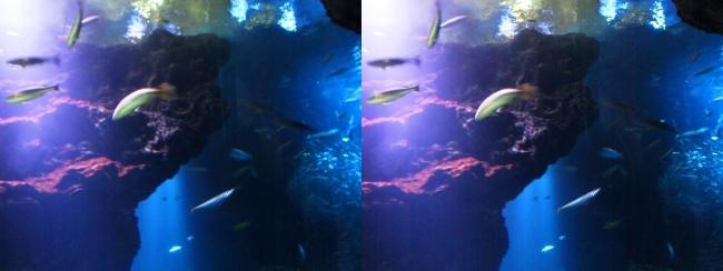 京都水族館 京の海①(平行法)