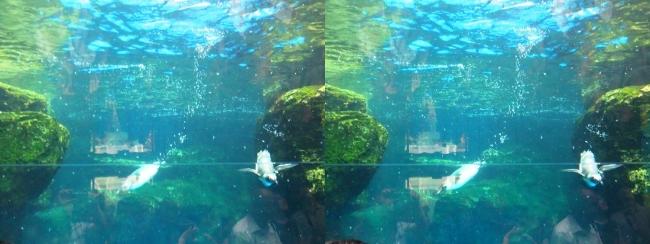 京都水族館 ペンギン③(交差法)