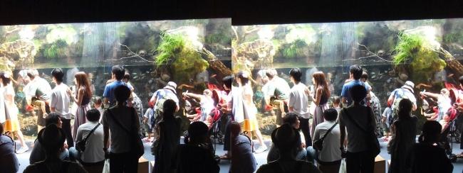 京都水族館 京の川④(平行法)