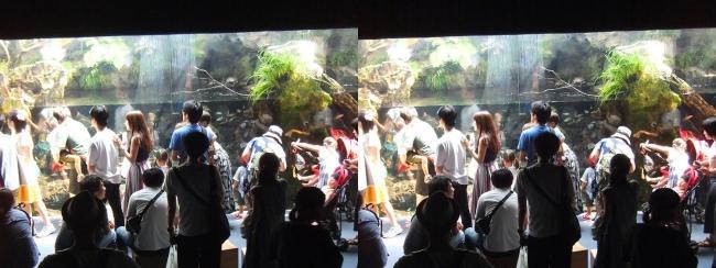 京都水族館 京の川④(交差法)