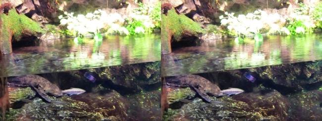 京都水族館 京の川①(平行法)