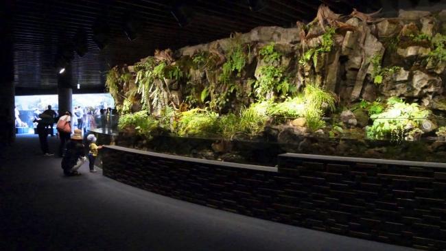 京都水族館 京の川ゾーン