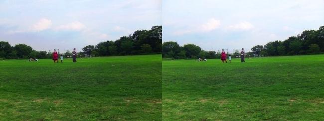 梅小路公園 芝生公園(平行法)