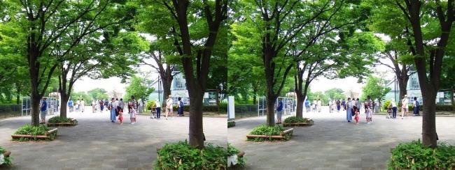 梅小路公園 大宮入口(平行法)