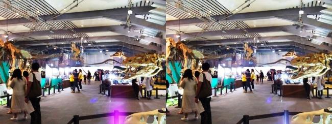 メガ恐竜展2017 会場全景(平行法)