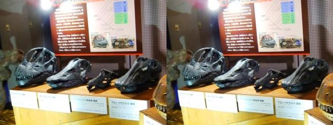 メガ恐竜展2017 ZONE9 カマラサウルス・ディプロドクス・ディプロドクス亜成体・ブロントサウルス頭骨(平行法)