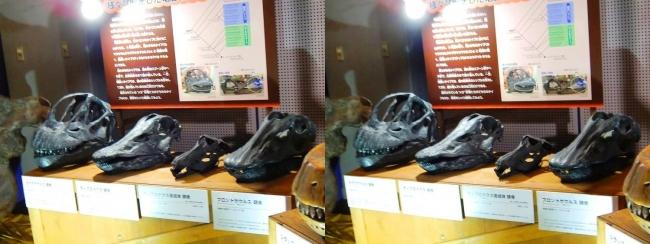 メガ恐竜展2017 ZONE9 カマラサウルス・ディプロドクス・ディプロドクス亜成体・ブロントサウルス頭骨(交差法)