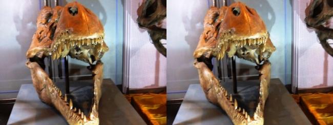 メガ恐竜展2017 ZONE9 ティラノサウルス頭骨(平行法)
