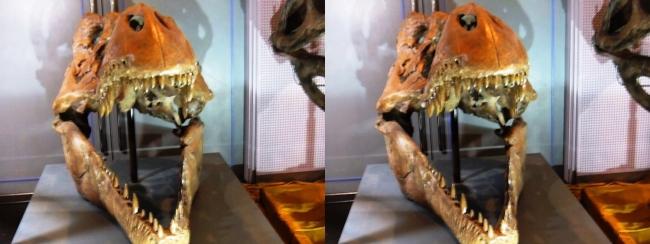 メガ恐竜展2017 ZONE9 ティラノサウルス頭骨(交差法)
