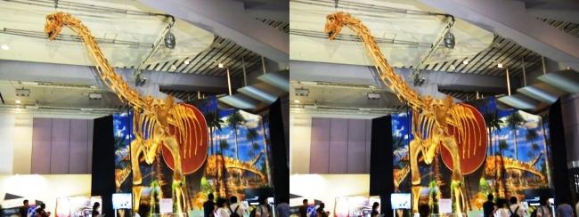 メガ恐竜展2017 ZONE9 トゥリアサウルス骨格復元②(交差法)