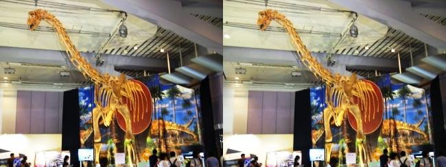 メガ恐竜展2017 ZONE9 トゥリアサウルス骨格復元②(平行法)