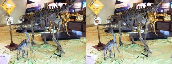 メガ恐竜展2017 ZONE8 エウロパサウルス親子骨格復元(平行法)