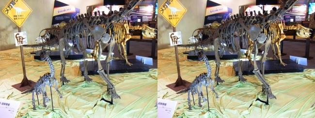メガ恐竜展2017 ZONE8 エウロパサウルス親子骨格復元(交差法)