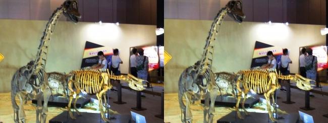 メガ恐竜展2017 ZONE8 エウロパサウルス・ニッポンサイ骨格復元(平行法)
