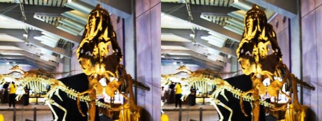 メガ恐竜展2017 ZONE6 ライスロナックス骨格復元②(平行法)