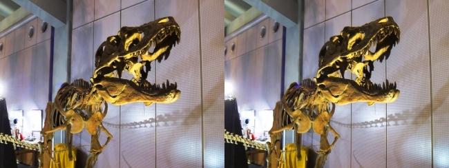 メガ恐竜展2017 ZONE6 ライスロナックス骨格復元①(平行法)