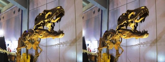 メガ恐竜展2017 ZONE6 ライスロナックス骨格復元①(交差法)