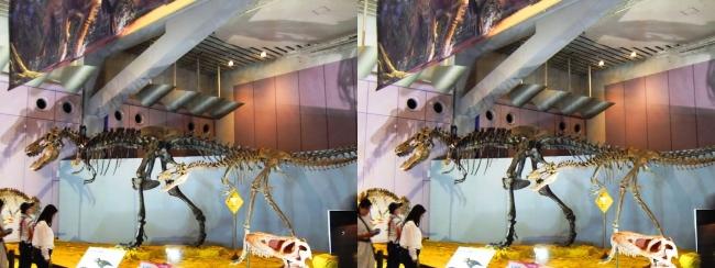 """メガ恐竜展2017 ZONE6 ティラノサウルス""""ジェーン""""骨格復元(平行法)"""