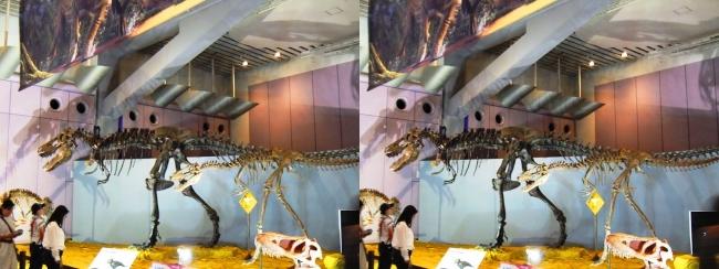 """メガ恐竜展2017 ZONE6 ティラノサウルス""""ジェーン""""骨格復元(交差法)"""