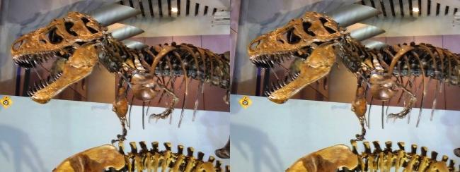 メガ恐竜展2017 ZONE6 ティラノサウルス骨格復元(平行法)
