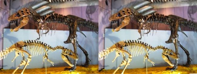 メガ恐竜展2017 ZONE6 ティラノサウルス・テラトフォネウス骨格復元②(平行法)