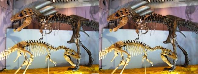 メガ恐竜展2017 ZONE6 ティラノサウルス・テラトフォネウス骨格復元②(交差法)