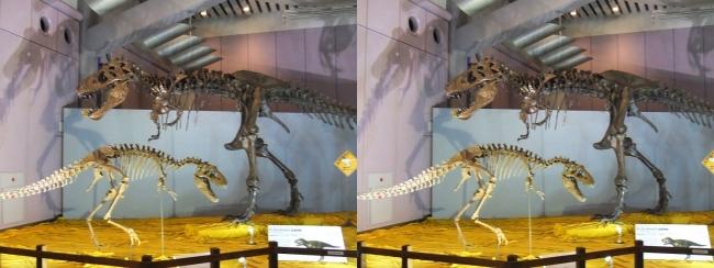 メガ恐竜展2017 ZONE6 ティラノサウルス・テラトフォネウス骨格復元①(平行法)