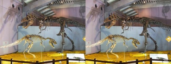 メガ恐竜展2017 ZONE6 ティラノサウルス・テラトフォネウス骨格復元①(交差法)