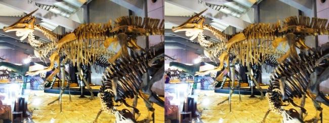 メガ恐竜展2017 ZONE5 プロバクトロサウルス・サウロロフス・カルノタウルス骨格復元(平行法)