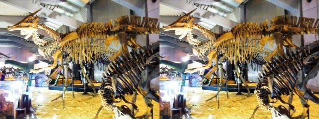 メガ恐竜展2017 ZONE5 プロバクトロサウルス・サウロロフス・カルノタウルス骨格復元(交差法)