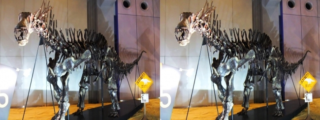 メガ恐竜展2017 ZONE5 アマルガサウルス骨格復元(平行法)