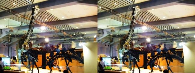 メガ恐竜展2017 ZONE4 ディプロドクス・アロサウルス・ステゴサウルス骨格復元(平行法)