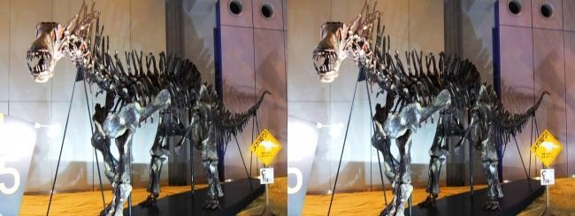 メガ恐竜展2017 ZONE5 アマルガサウルス骨格復元(交差法)