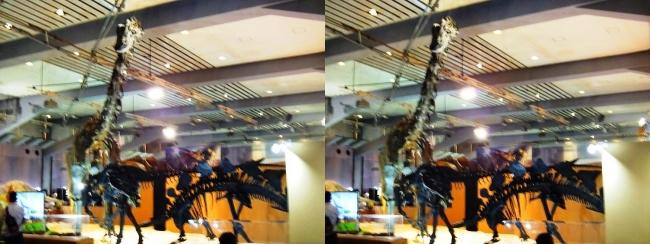 メガ恐竜展2017 ZONE4 ディプロドクス・アロサウルス・ステゴサウルス骨格復元(交差法)