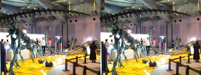 メガ恐竜展2017 ZONE4 アロサウルス骨格復元③(平行法)